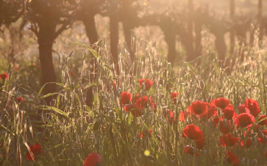 הטבע מחזיר אהבה